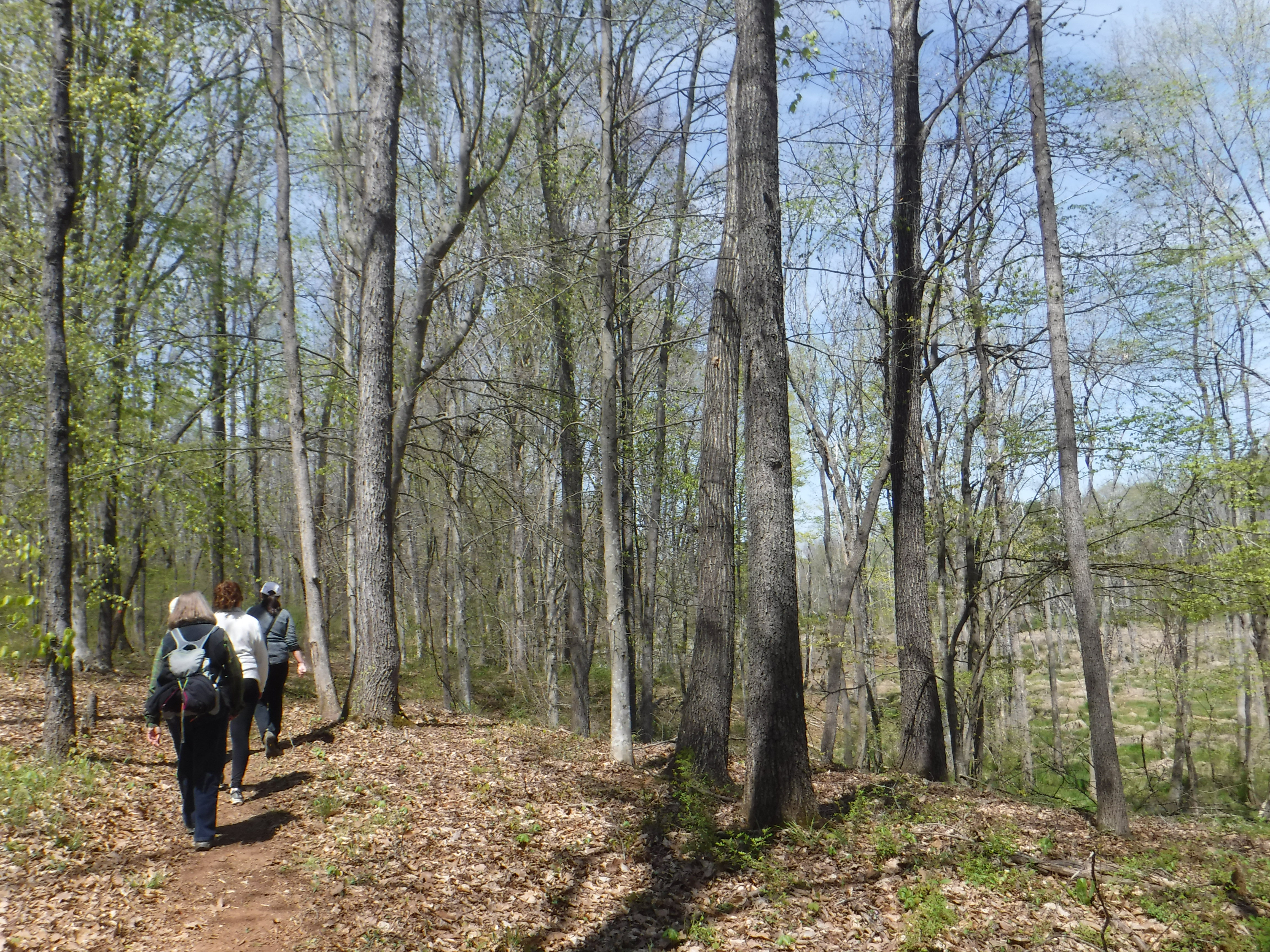 Great Blue Heron Trail, Iron Ore Belt Access, Haw River State Park
