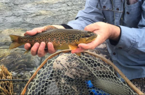 Fly Fishing Class | Winston-Salem - Fall 2019 @ Private Pond in Germanton, NC
