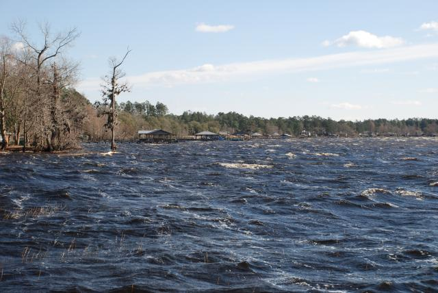 Winter chop on Lake Waccamaw, appreciated from the trail