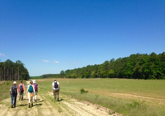 Hiking along an airstrip, at Turnbull Creek