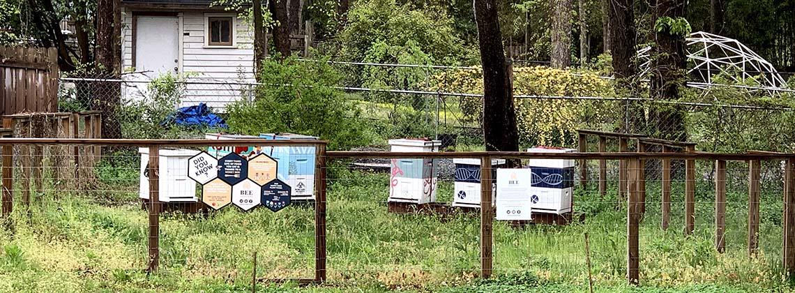 Keep Durham Beautiful Pollinator Project