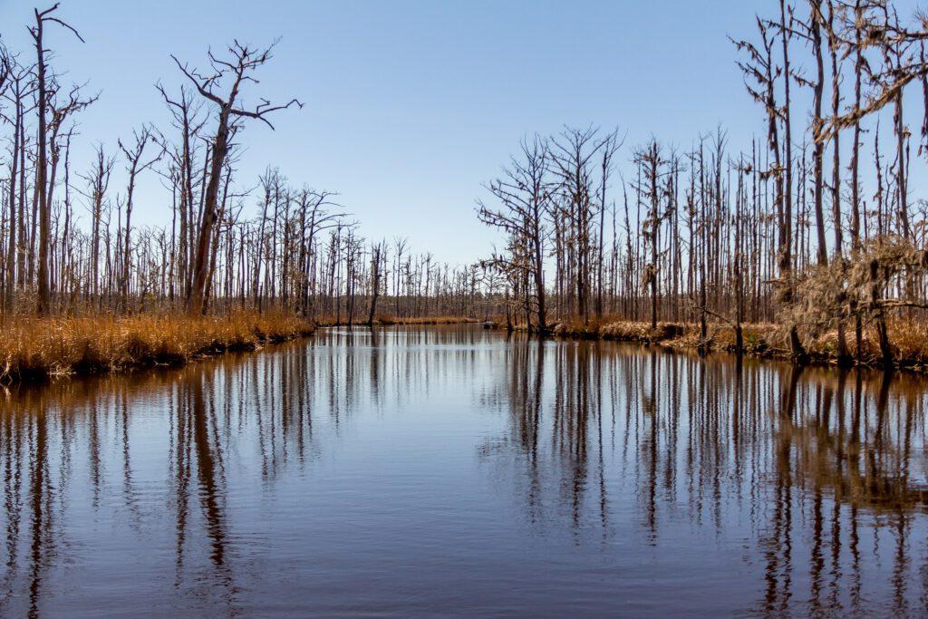 Brunswick Nature Park-4