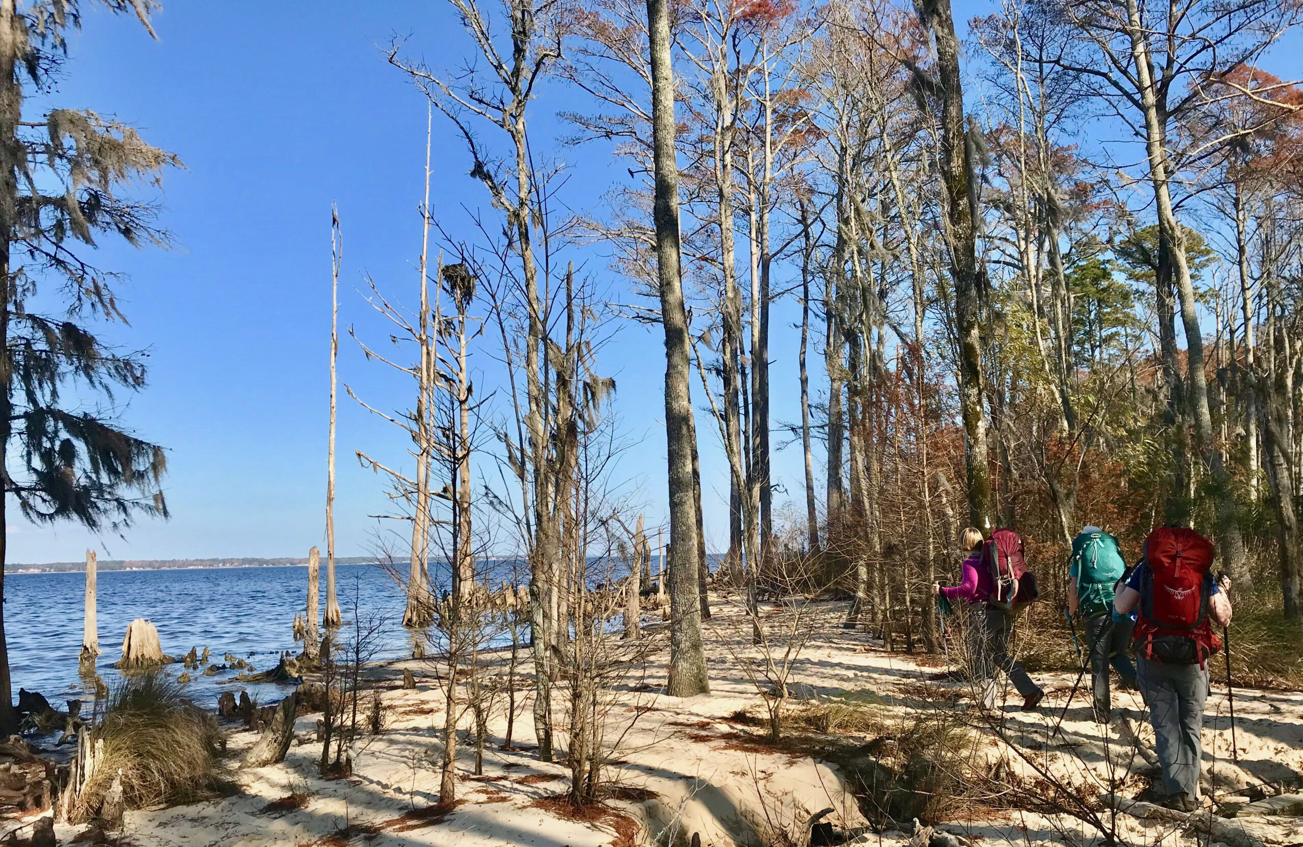 A holiday hike in the Croatan National Forest.