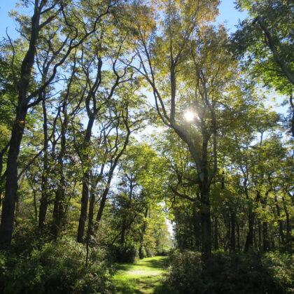sun shine through trees on path